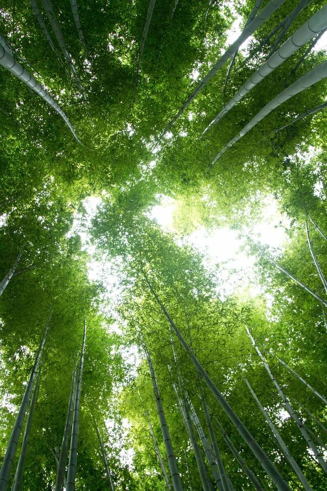 竹林の中の写真