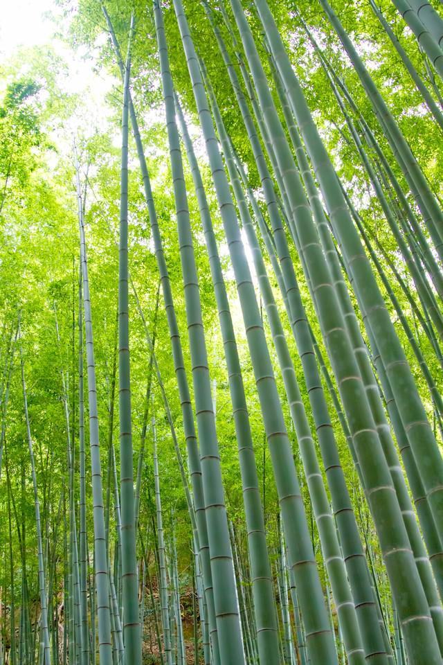 竹林と日差しの写真