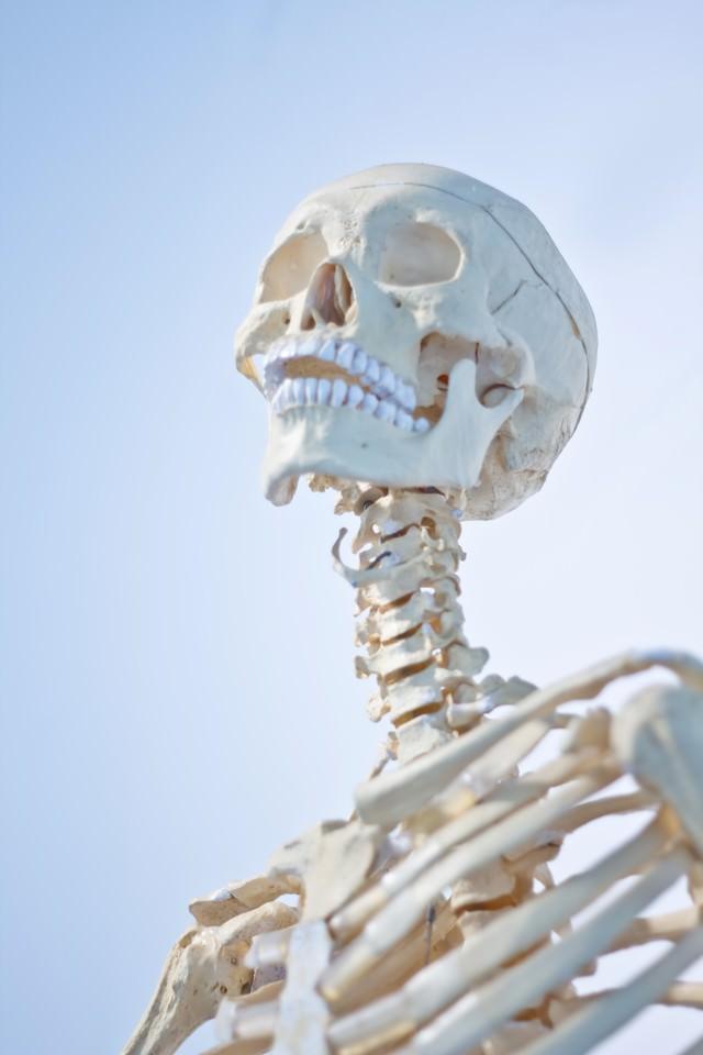 骸骨の標本の写真