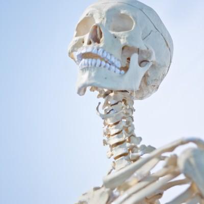 「骸骨の標本」の写真素材