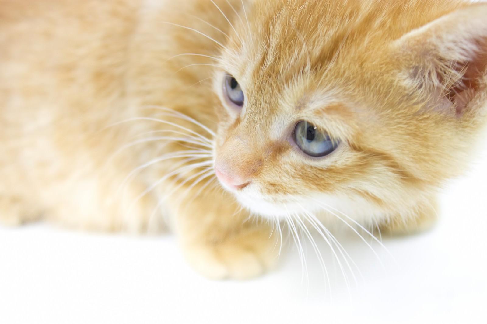 猫が死ぬ夢の意味と心理|ペット/野良猫/みる/殺す【夢占い】