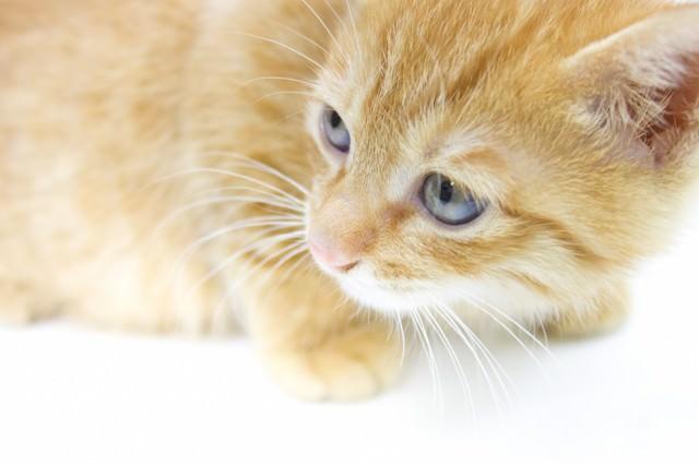 振り返る子猫の写真