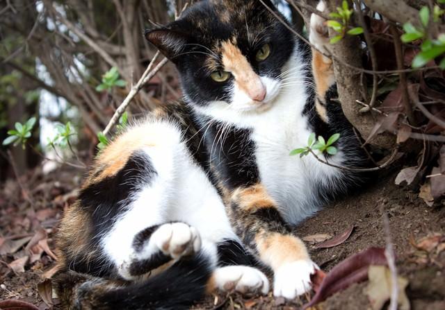 警戒する猫の写真