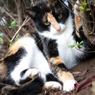 「警戒する猫」の写真素材