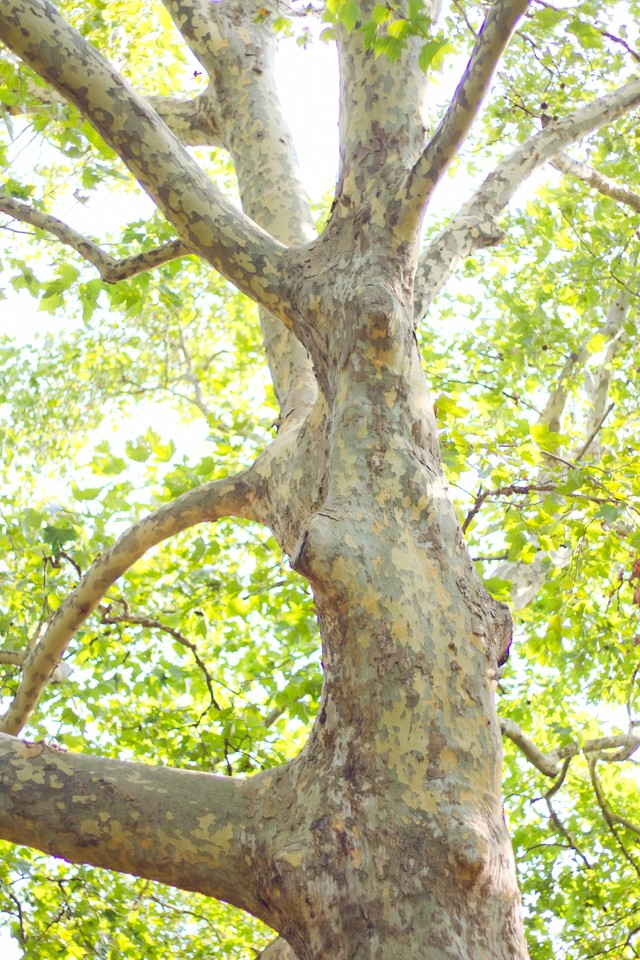 木漏れ日と暖かい日差しの写真