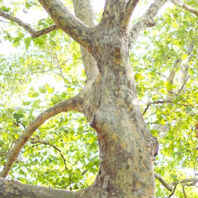 「木漏れ日と暖かい日差し」の写真素材