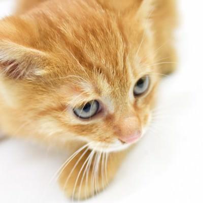 「可愛い子猫」の写真素材