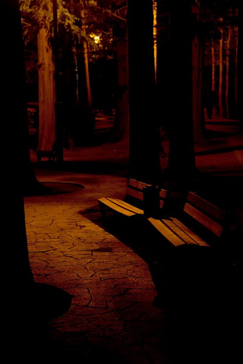 「暗闇の公園のベンチ」の写真