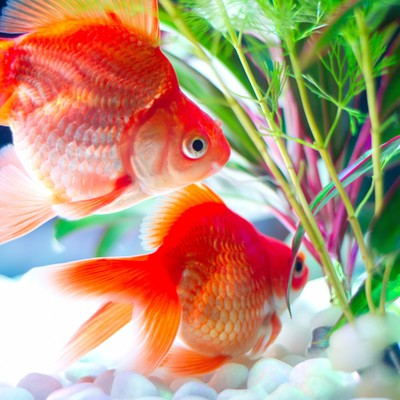 「水草と金魚」の写真素材