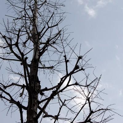 「葉が落ちた木」の写真素材
