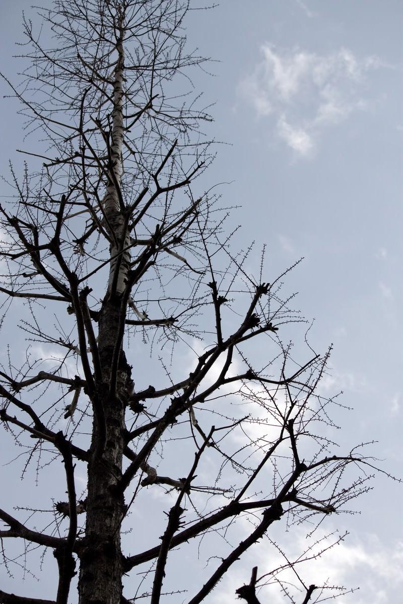 「葉が落ちた木」の写真