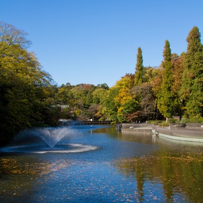 黄葉が始まった井の頭公園の写真
