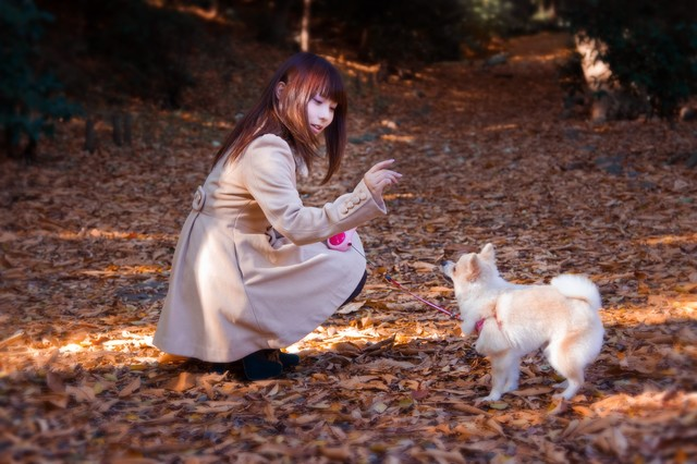 落ち葉の中、犬とお散歩中のコートの女の子の写真