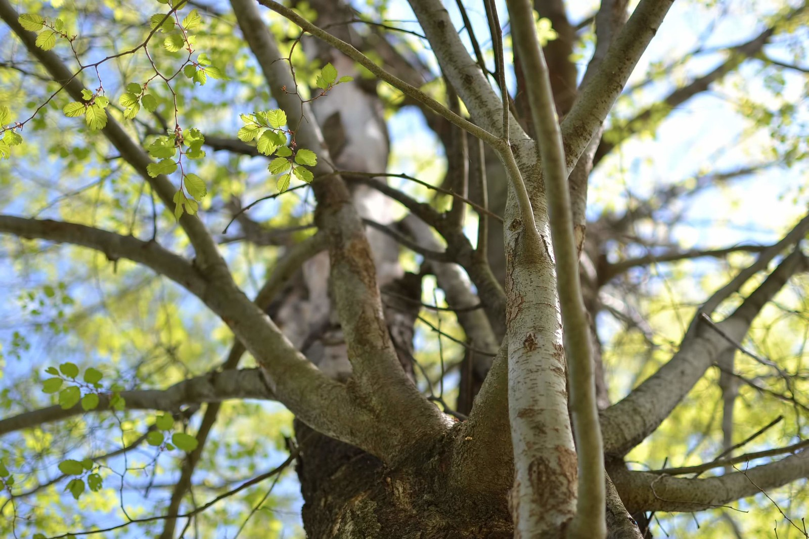 「春を迎える木」の写真