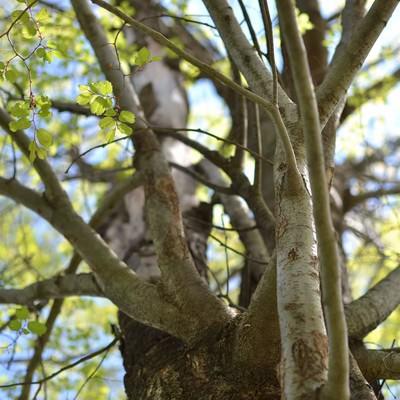 春を迎える木の写真