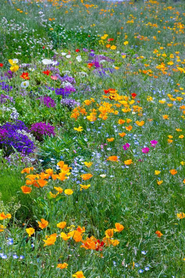 広がる花々の写真
