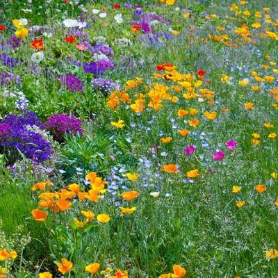 「広がる花々」の写真素材