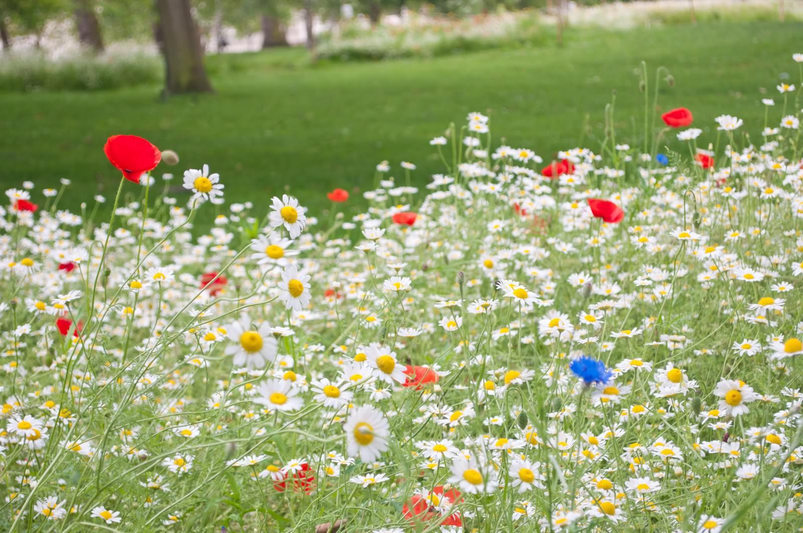 「セントジェームズパークのメドウ花壇」の写真