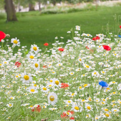 「セントジェームズパークのメドウ花壇」の写真素材
