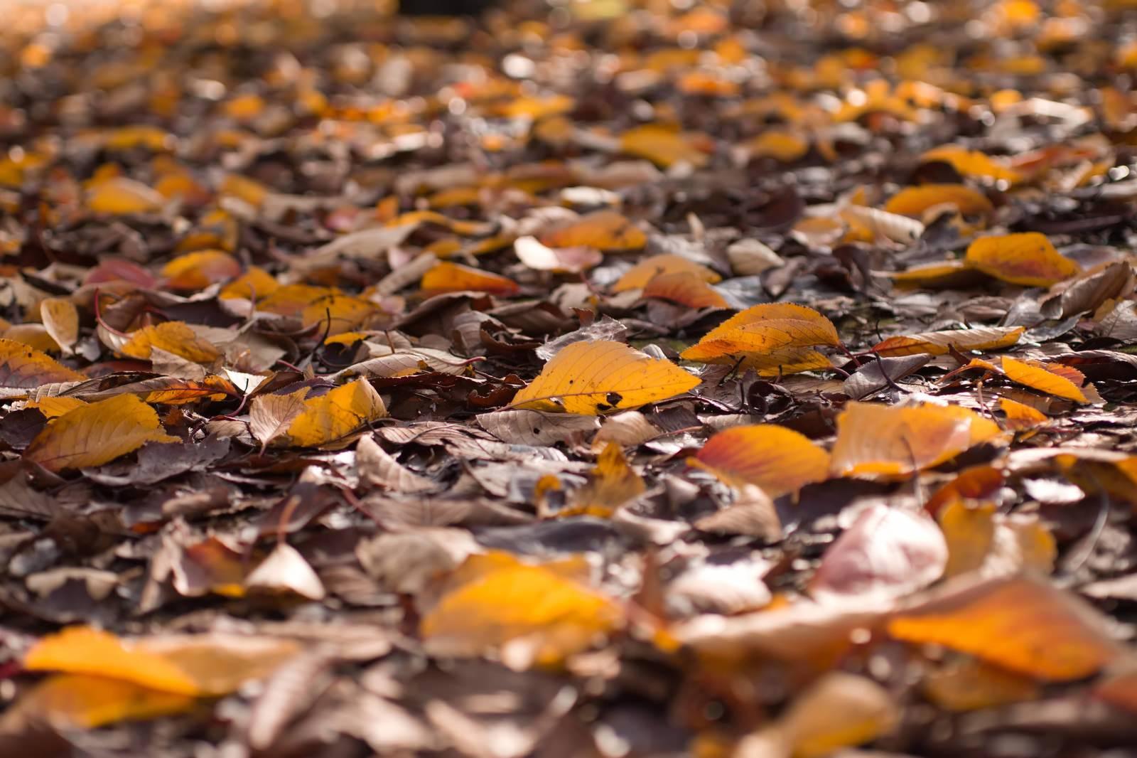 「落ち葉」の写真