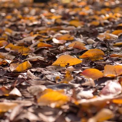 「落ち葉」の写真素材