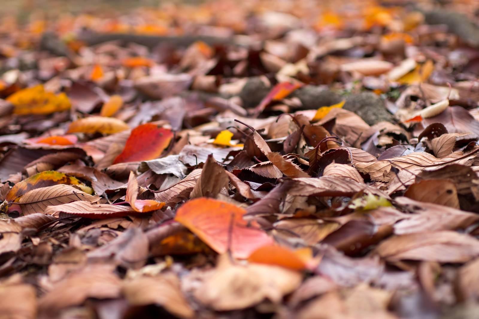 「落ち葉の様子」の写真