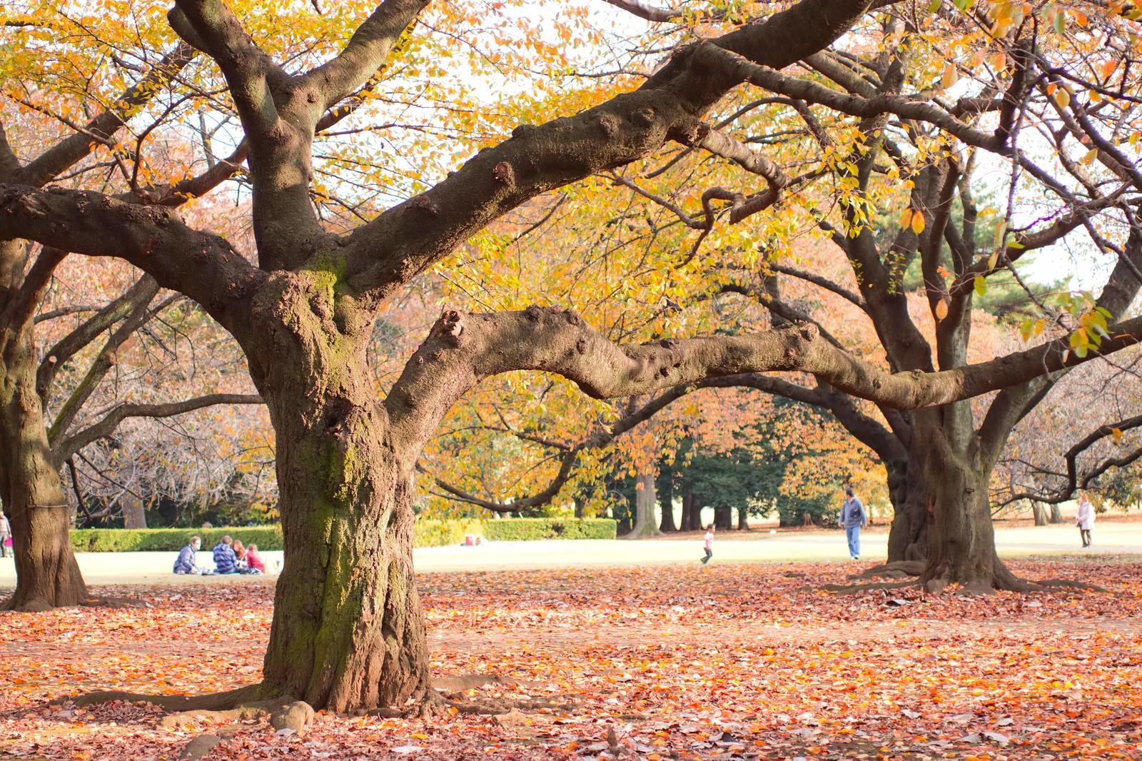 「落ち葉の中、公園でくつろぐ人達」の写真