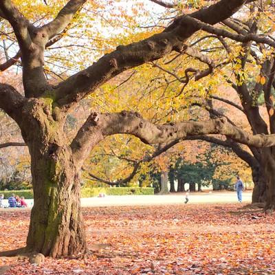 「落ち葉の中、公園でくつろぐ人達」の写真素材