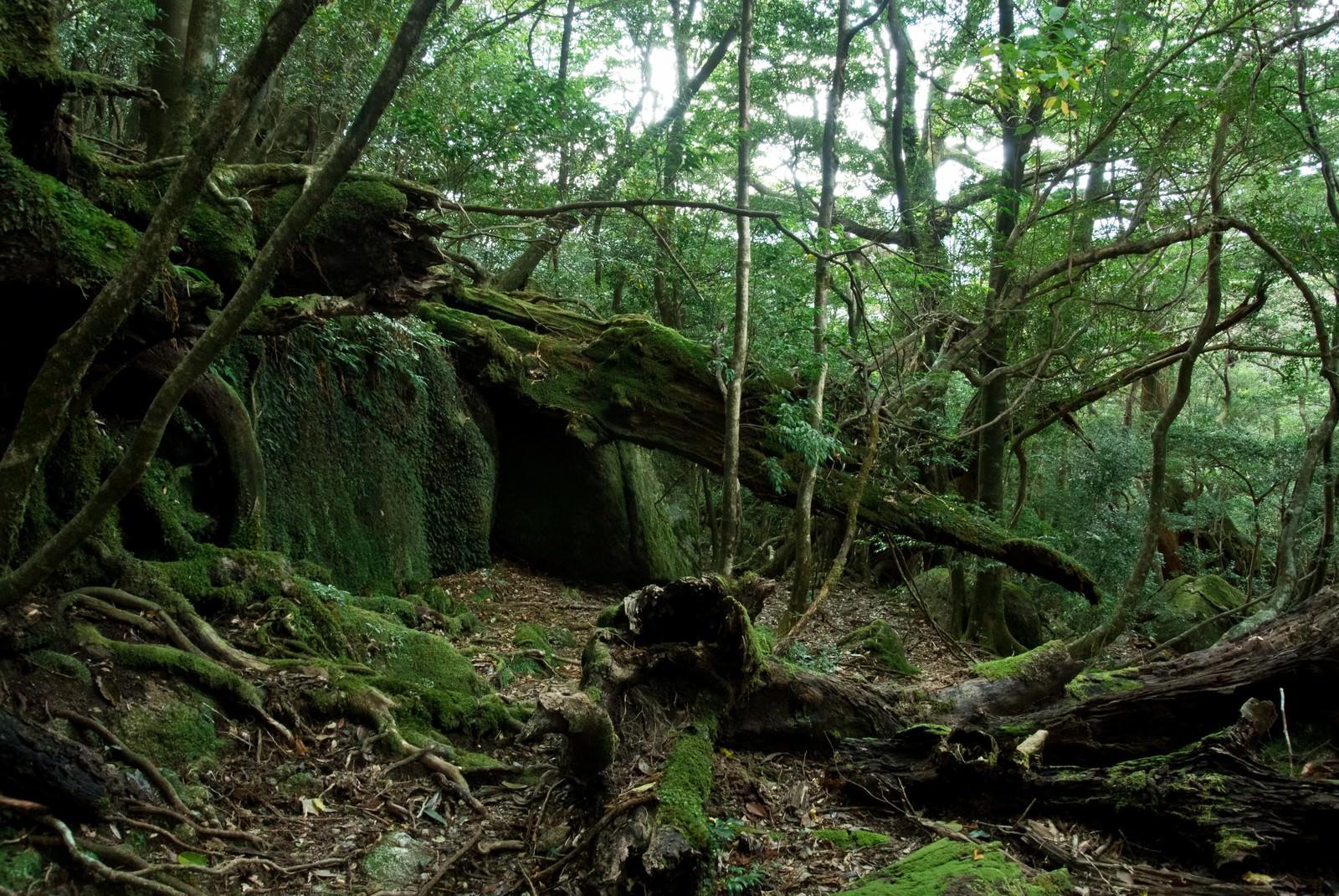 「屋久島の森と折れた木々」の写真