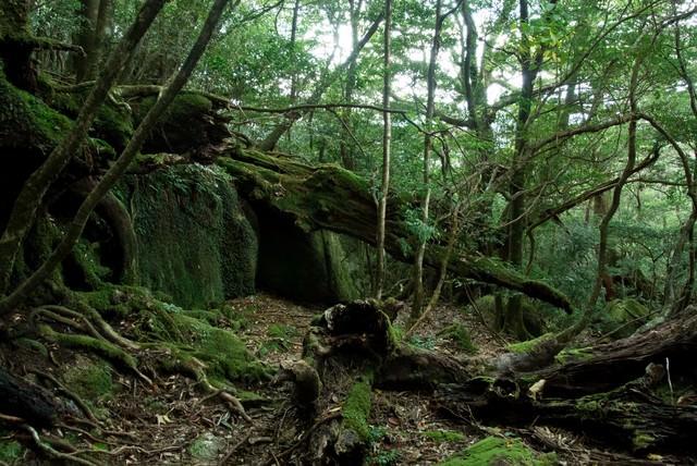 屋久島の森と折れた木々の写真
