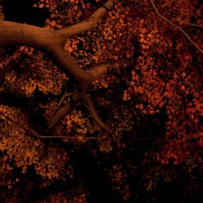 「ライトアップされた夜の紅葉」の写真素材