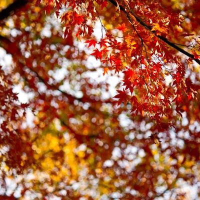 秋の終わりと黄葉の写真