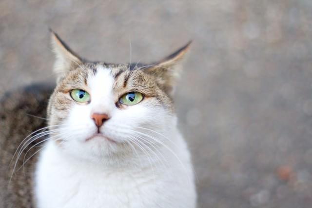 口がヘの字の猫ちゃんの写真
