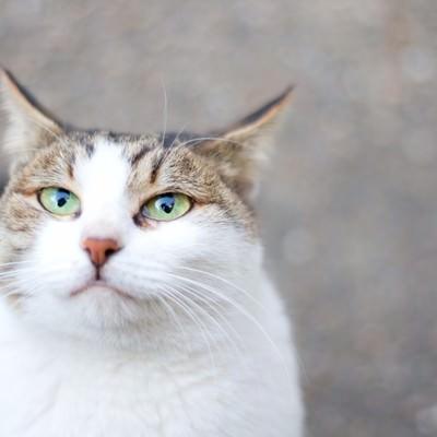 「口がヘの字の猫ちゃん」の写真素材