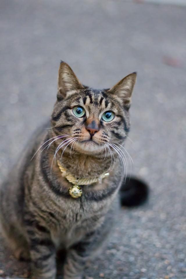 お座りする猫の写真