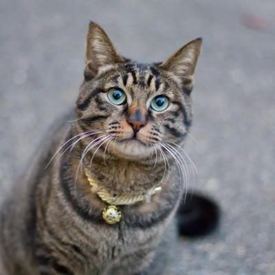 「お座りする猫」の写真素材