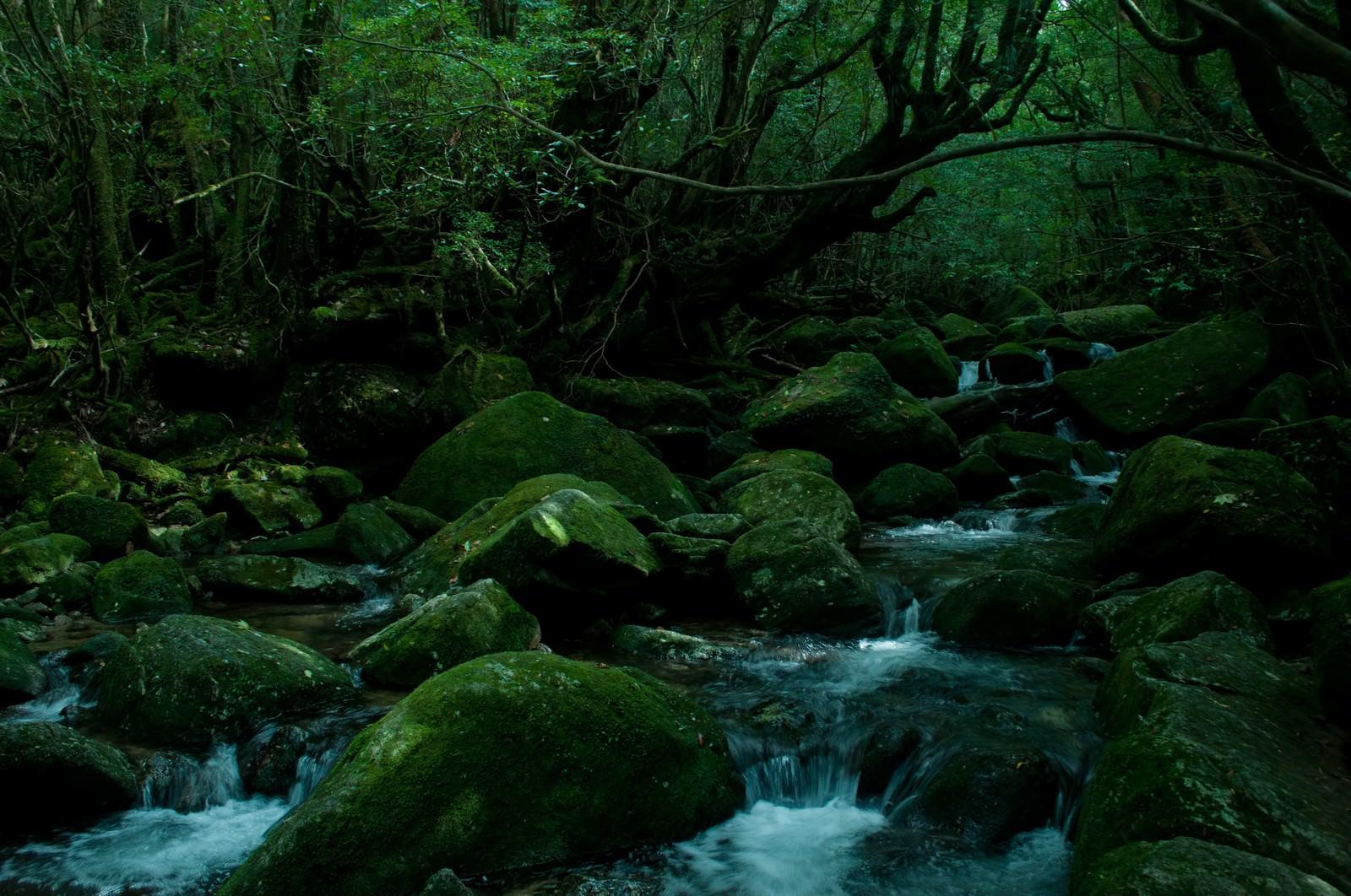 「屋久島の深い森と川の流れ」の写真