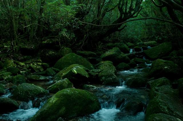 屋久島の深い森と川の流れの写真
