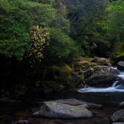 「屋久島の白谷雲水峡」の写真素材