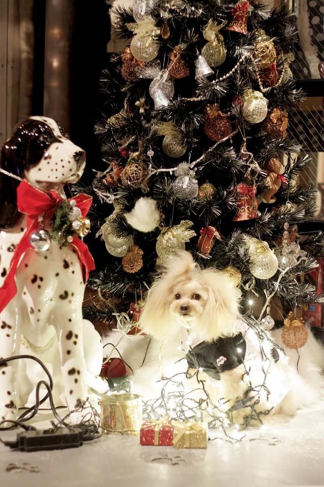 クリスマスツリーとワンちゃんの写真