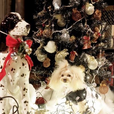 「クリスマスツリーとワンちゃん」の写真素材