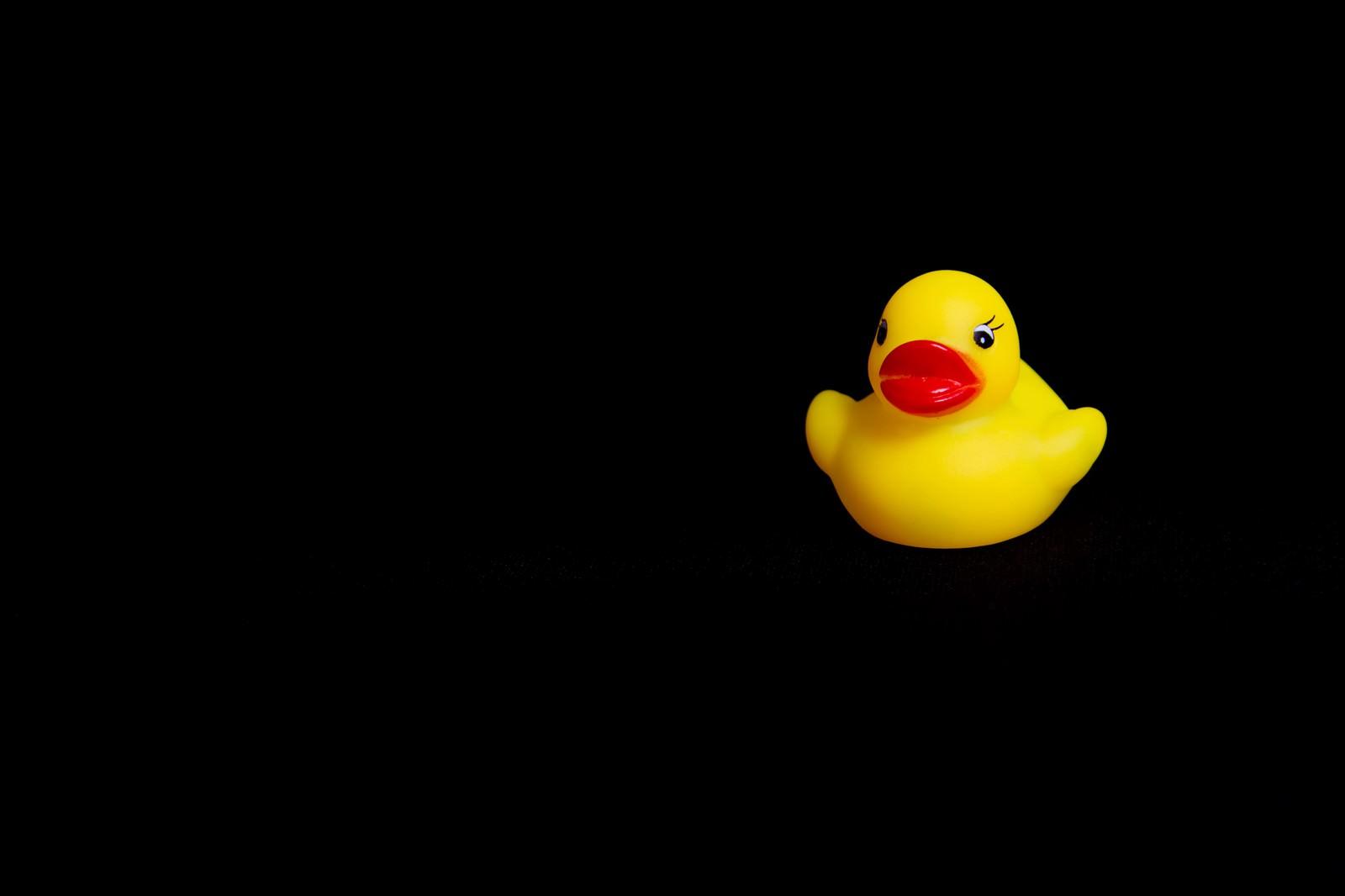 「暗闇のあひるちゃん1羽」の写真