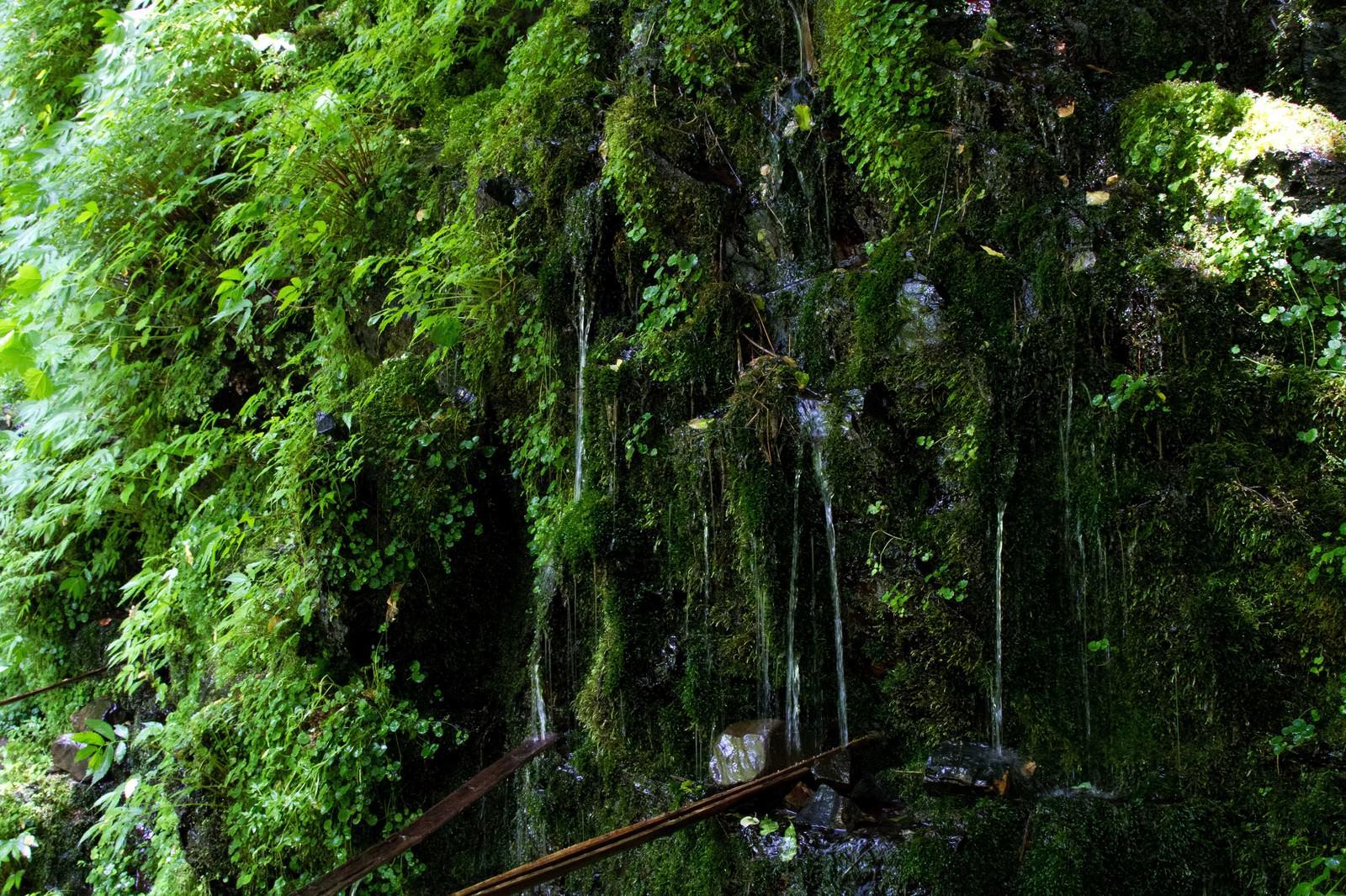 「延命水の湧水」の写真