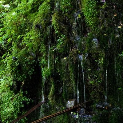 「延命水の湧水」の写真素材