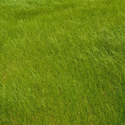「風に揺られる草」の写真素材