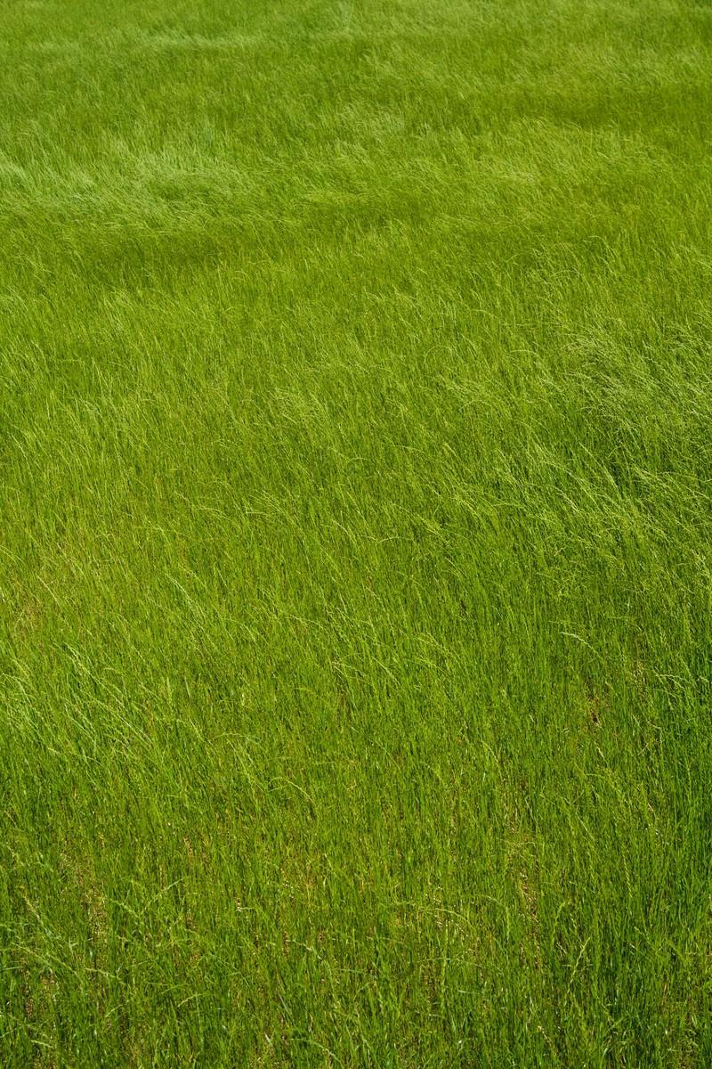 「風に揺られる草」の写真