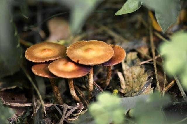 落ち葉の中のキノコの写真