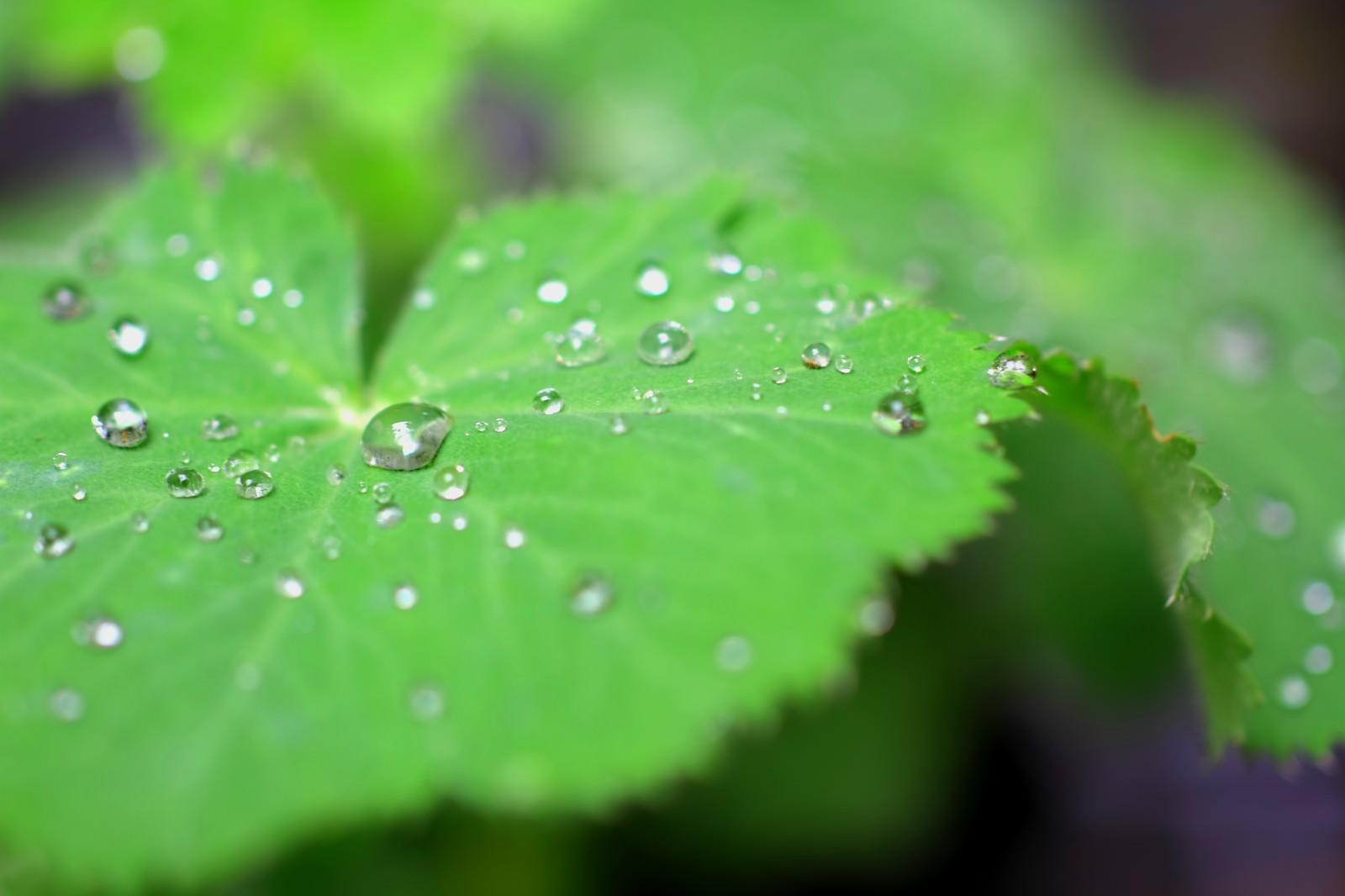 「葉の上の水滴」の写真