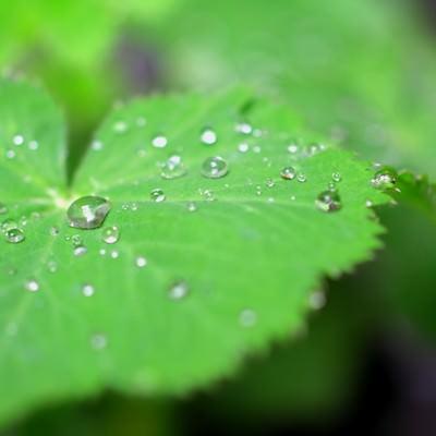 葉の上の水滴の写真