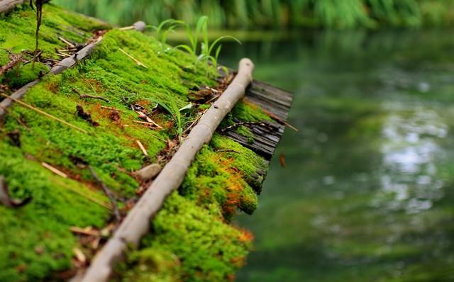 苔がついた屋根と川の写真